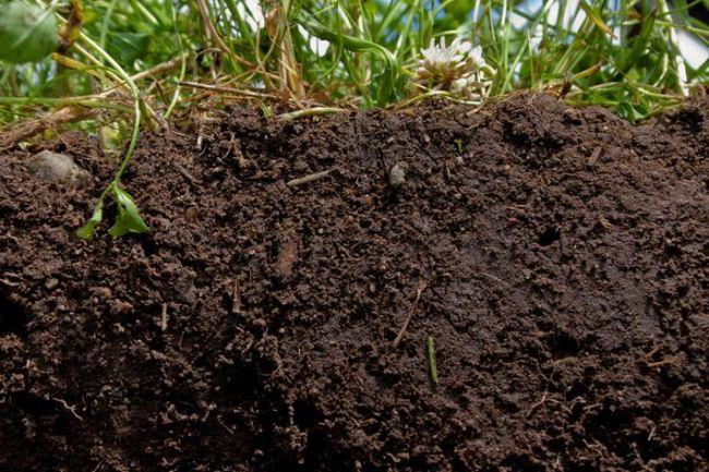 Сферы применения и особенности состава грунта